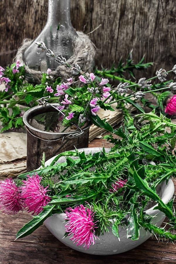 Dojnego osetu kwiat obrazy royalty free