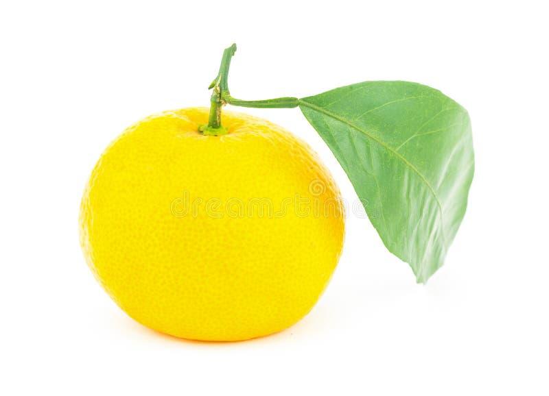 Dojrzała żółta duża owocowa cytrus owoc mandarynka z ampuły zieleni liściem odizolowywał tło jeden owocowy zakończenie zdjęcie stock