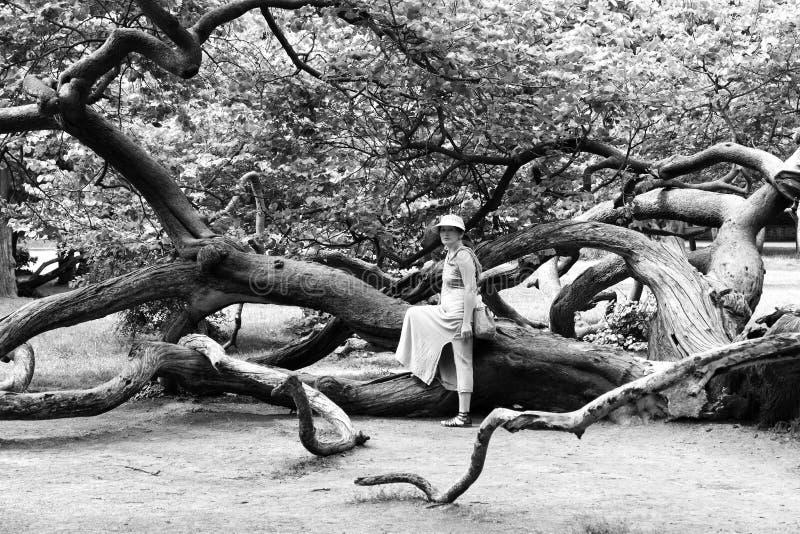 Dojrzała kobieta blisko drzewa w parku fotografia stock