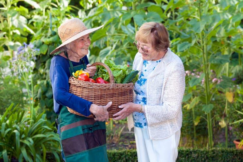 Dojrzała kobieta Pomaga Starszej ogrodniczki z koszem zdjęcie stock