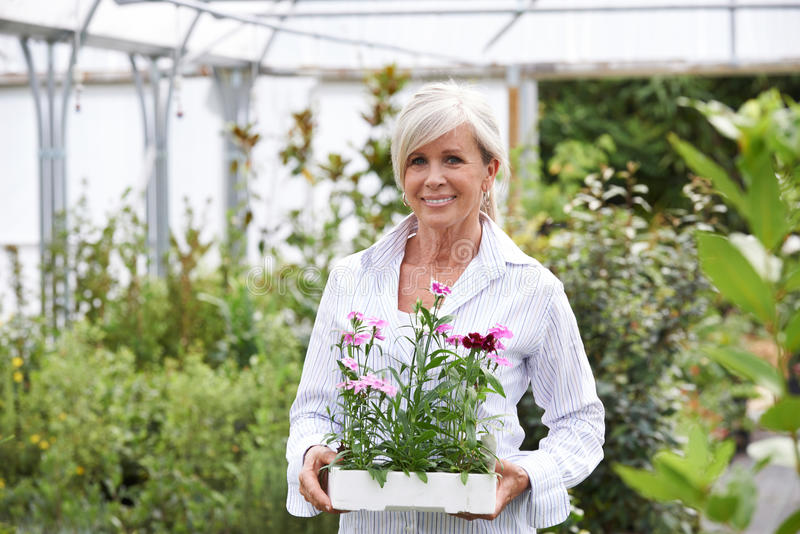 Dojrzała kobieta Wybiera rośliny Przy Ogrodowym centrum fotografia royalty free