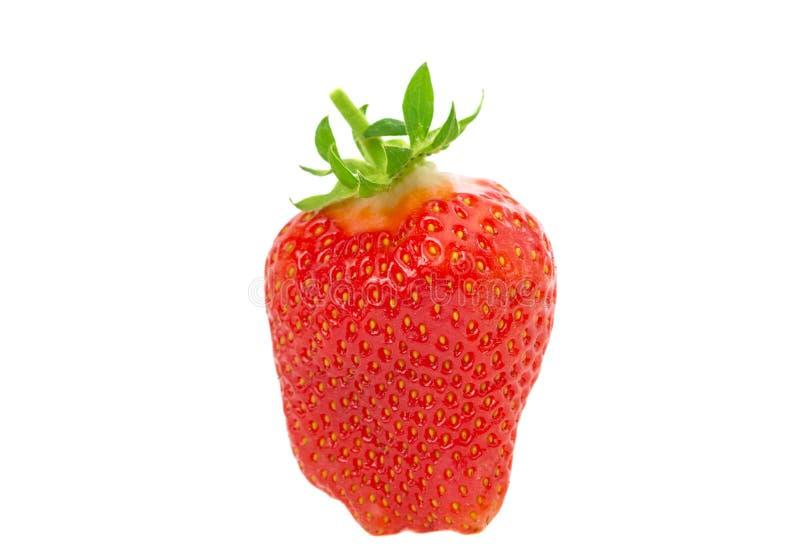dojrzałe świeże truskawki zdjęcie stock