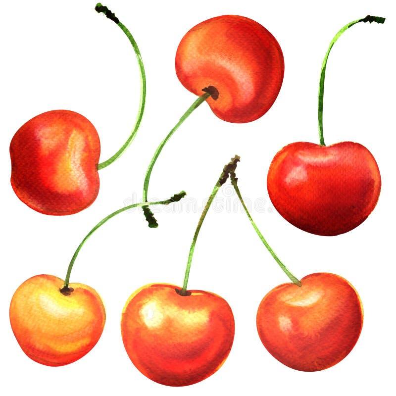 Dojrzałe czereśniowe jagodowe owoc, wiśnie, odizolowywać, akwareli ilustracja na bielu ilustracji