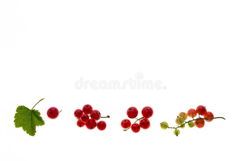 Dojrzałe i niedojrzałe redcurrant jagody odizolowywać na białym tle z kopii przestrzenią obrazy stock