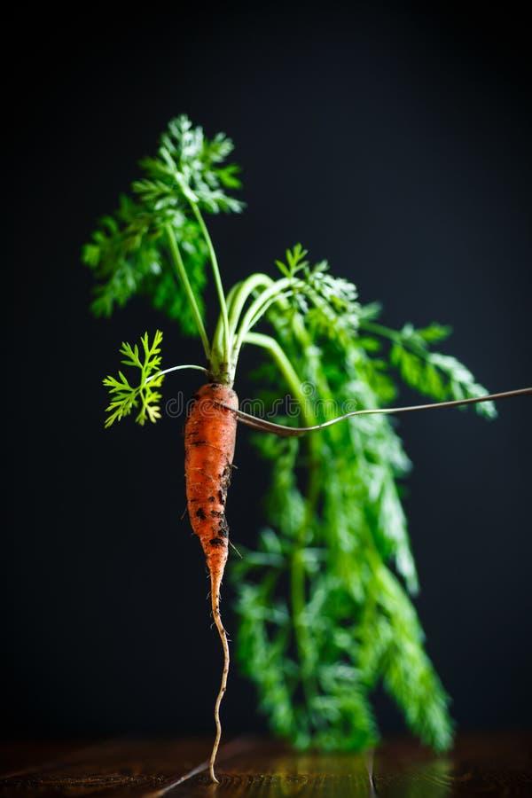 Dojrzałe organicznie surowe marchewki fotografia royalty free