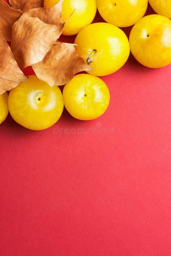Dojrzałe soczyste kolorowe żółte śliwki z suchymi pomarańczowymi liśćmi na zmroku - czerwony ciemnopąsowy Burgundy tło Mieszkania zdjęcie royalty free