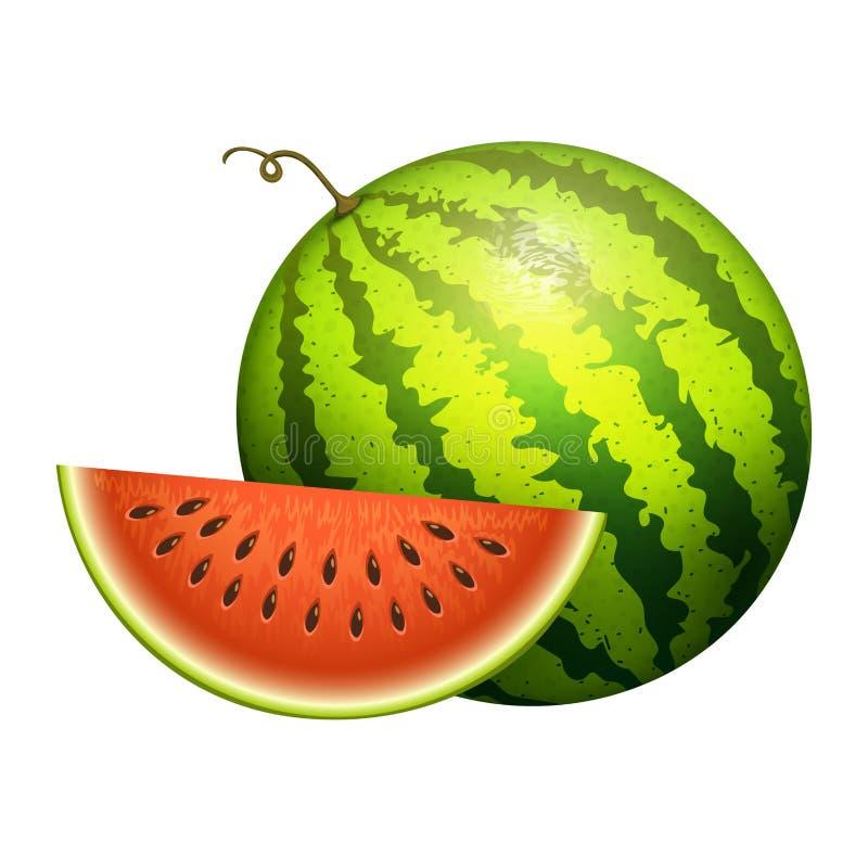 Dojrzałego pasiastego arbuza plasterka realistyczna soczysta wektorowa ilustracyjna zieleń odizolowywał dojrzałego melon ilustracja wektor