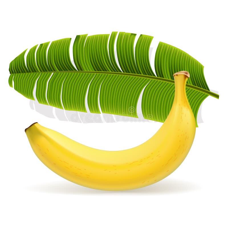 Dojrzały żółty banan z liściem ilustracja wektor