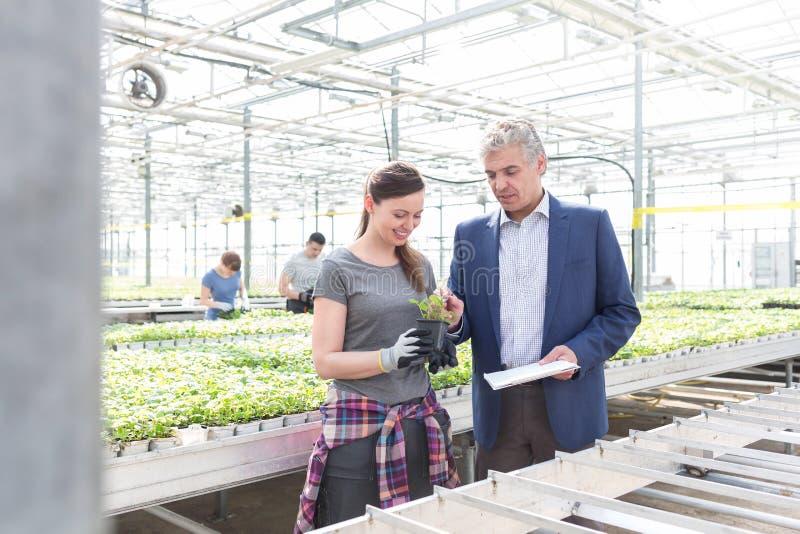 Dojrzały biznesmen dyskutuje z żeńskim botanikiem w rośliny pepinierze zdjęcia royalty free
