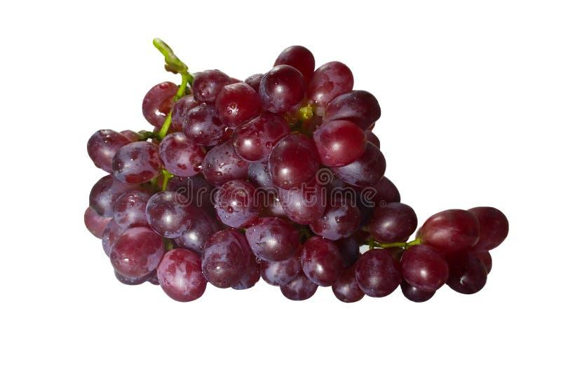 Dojrzały czerwony winogrono z wiązką odizolowywającą na białym tle fotografia stock