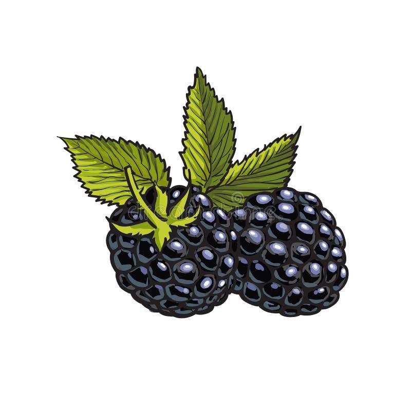Dojrzały dewberry na białym tle ilustracja wektor