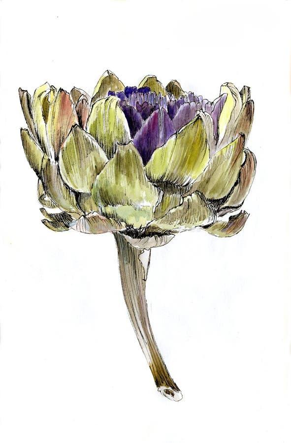 Dojrzały karczocha kwiat royalty ilustracja