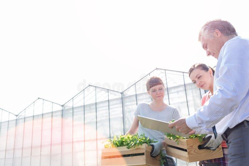 Dojrzały męski biochemik dyskutuje z żeńskimi botanikami przeciw jasnemu niebu fotografia royalty free