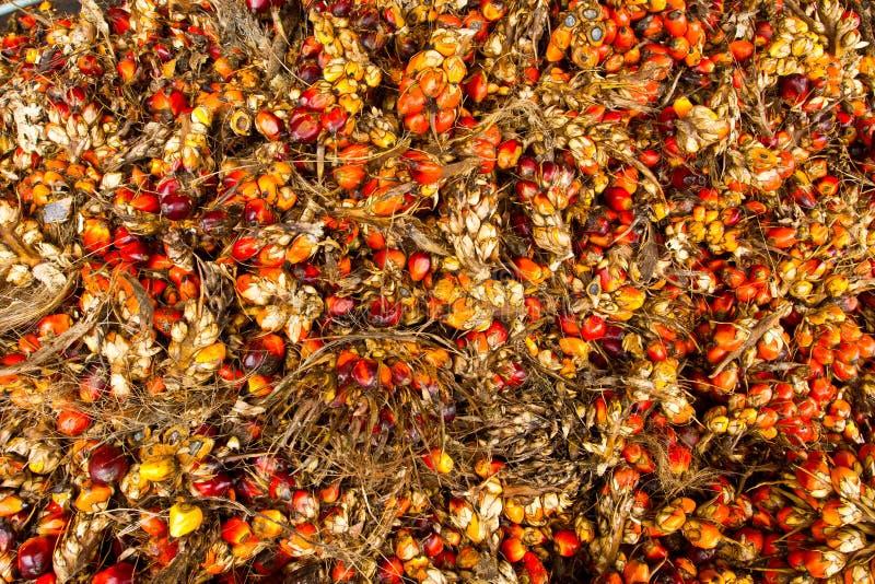dojrzały palma owocowy stos zdjęcia royalty free