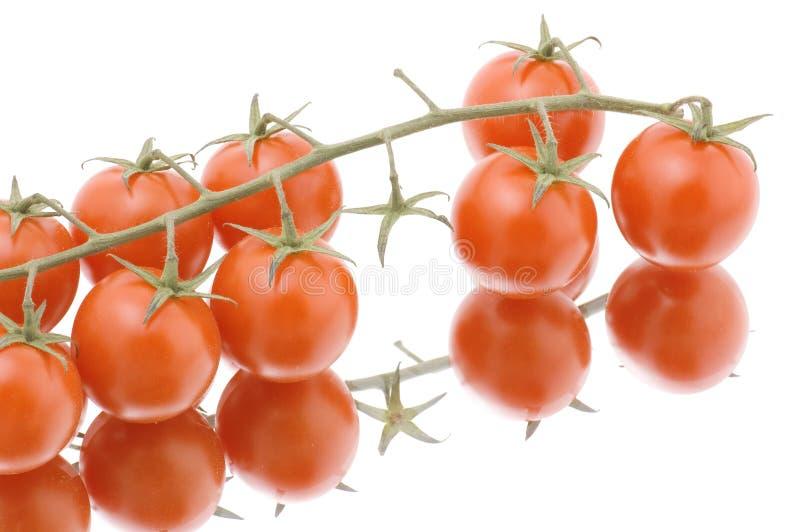 dojrzały pomidorowy biel obrazy stock