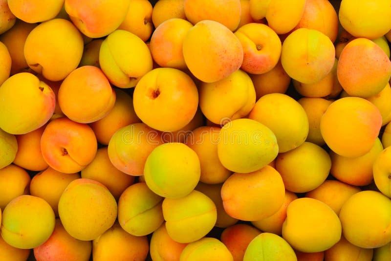 Dojrzały soczysty pomarańczowy moreli owoc tło zdjęcia royalty free