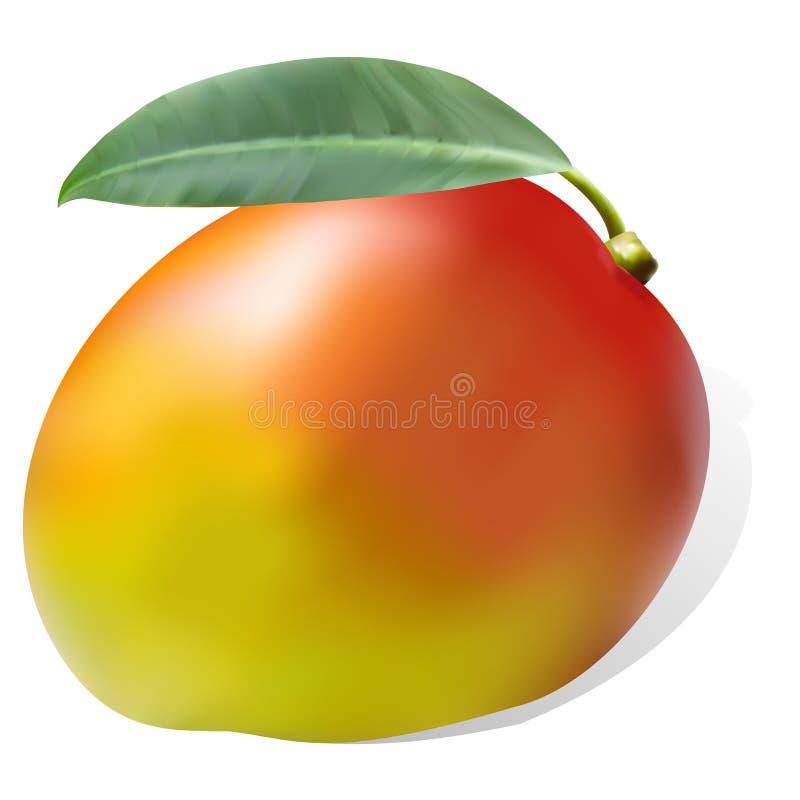Dojrzały soczysty słodki mangowy liść jeden ilustracja wektor