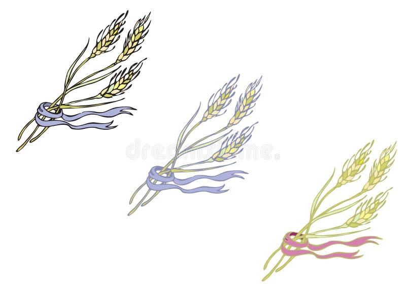 Dojrzały spikelets zboże ilustracji