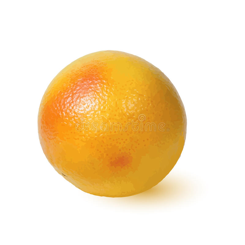 Dojrzały Złoty apetyczny grapefruitowy royalty ilustracja