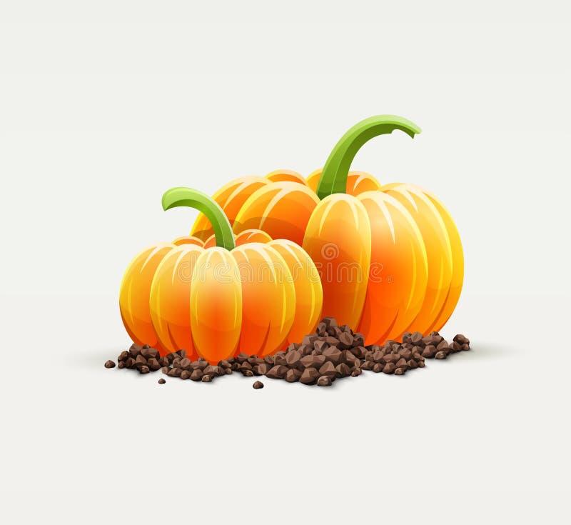 Dojrzali dyniowi warzywa przy glebowym jesieni żniwem royalty ilustracja