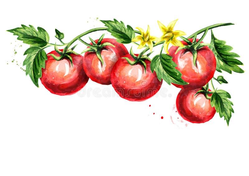 Dojrzali pomidory na gałąź z liśćmi i kwiatem Akwareli ręka rysująca horyzontalna ilustracja, odizolowywająca na białym tle royalty ilustracja
