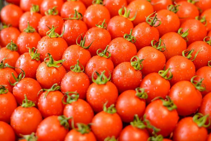 Dojrzali soczy?ci pomidory obrazy royalty free