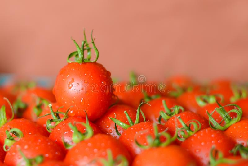 Dojrzali soczy?ci pomidory fotografia stock