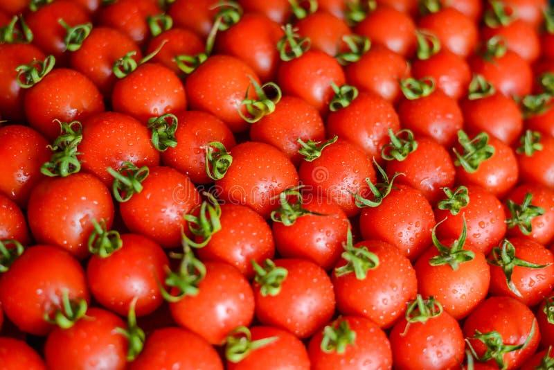 Dojrzali soczy?ci pomidory w pude?ku fotografia royalty free