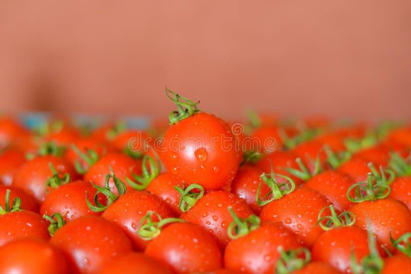 Dojrzali soczy?ci pomidory w pude?ku fotografia stock