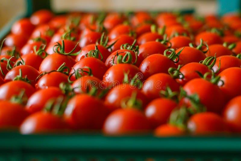 Dojrzali soczy?ci pomidory w pude?ku zdjęcia stock