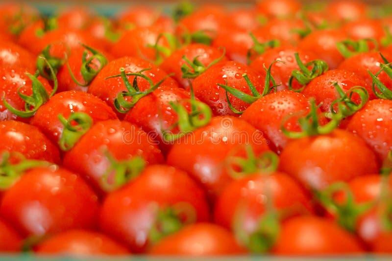 Dojrzali soczy?ci pomidory w pude?ku zdjęcie stock