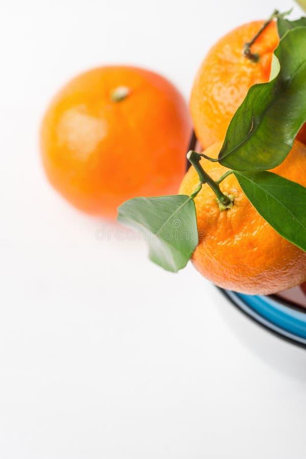 Dojrzali surowi jaskrawi pomarańczowi tangerines z trzon zielenią opuszczają na gałęziasty żebro brogujących błękitnych i białych zdjęcia stock