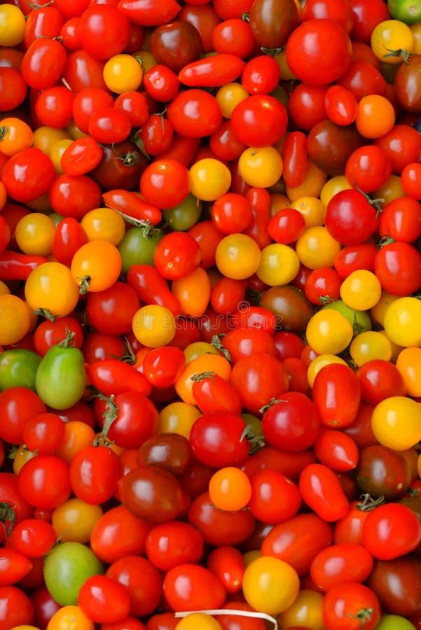 Dojrzenie pomidory zdjęcia stock