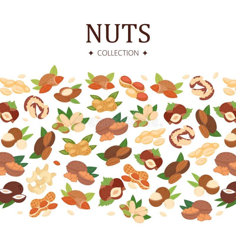 Dokrętka inkasowy plakat, płaska kreskówka sztandaru wektoru ilustracja Arachid, pistacja, nerkodrzew, koks, hazelnut i ilustracji