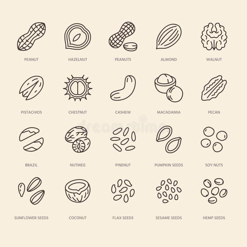Dokrętki mieszkania linii ikony ustawiać Arachid, migdał, kasztan, macadamia, nerkodrzew, pistacja, sosnowych ziaren wektoru ilus ilustracja wektor
