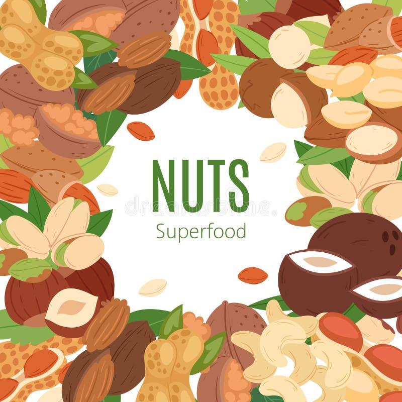 Dokrętki superfood kreskówki sztandaru wektoru inkasowa płaska ilustracja Arachid, pistacja, nerkodrzew, koks, hazelnut i ilustracja wektor