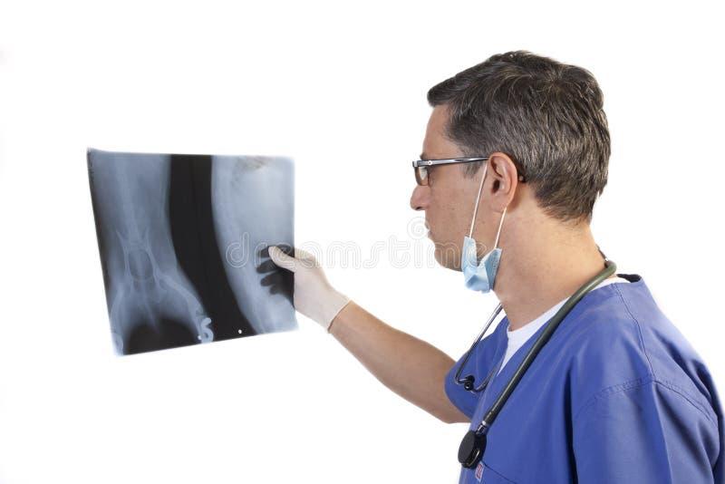 Doktor, der Röntgenstrahl schaut stockbild