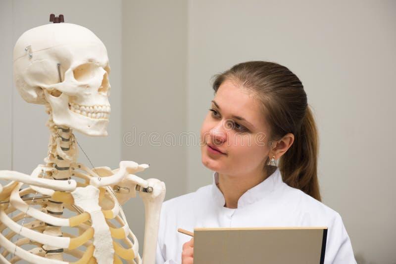 Doktor och skelett fotografering för bildbyråer