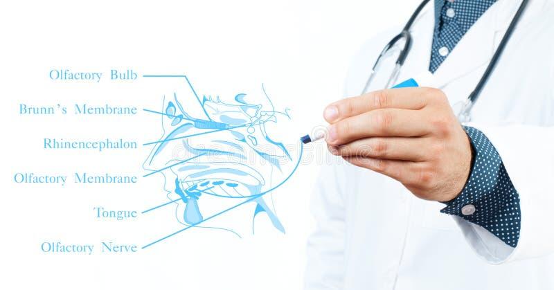 doktor stetoskop för pengar för begreppsliesmedicin set Lukt- system arkivfoto