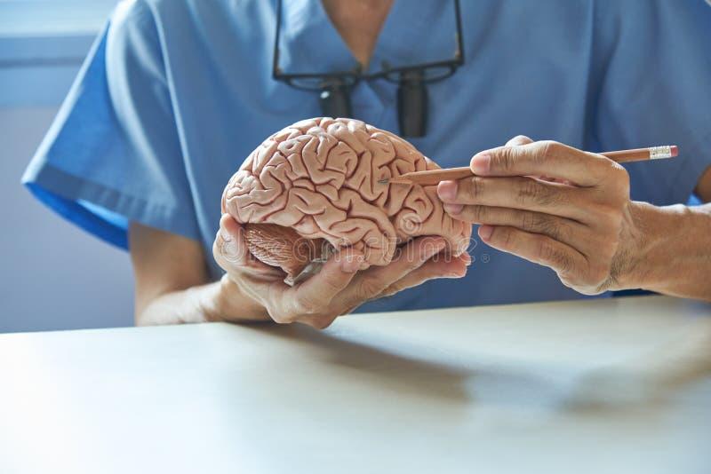 Doktor unter Verwendung des Bleistifts, zum von Anatomie künstlichen menschlichen b zu demonstrieren stockfoto