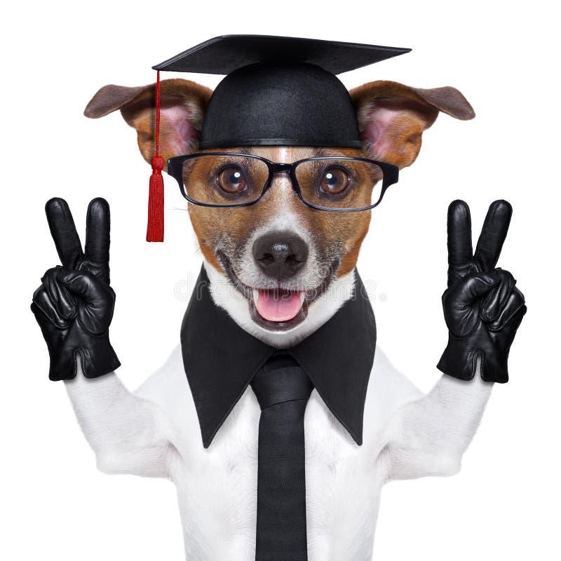 Doktorand- hund arkivbilder