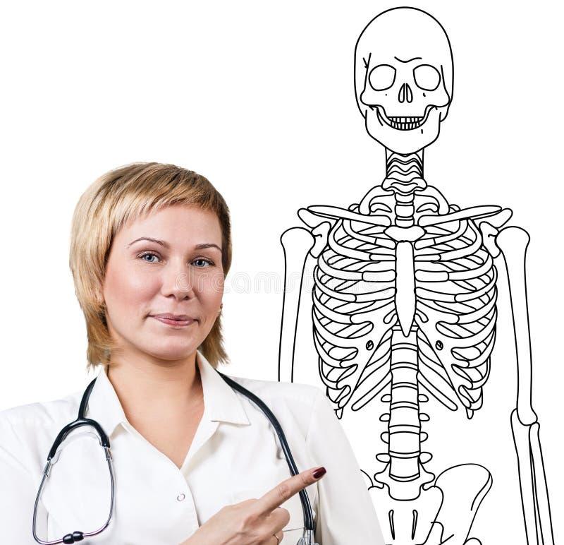 Doktorfrau, Die Auf Dem Zeichnen Des Menschlichen Skeletts Zeigt ...