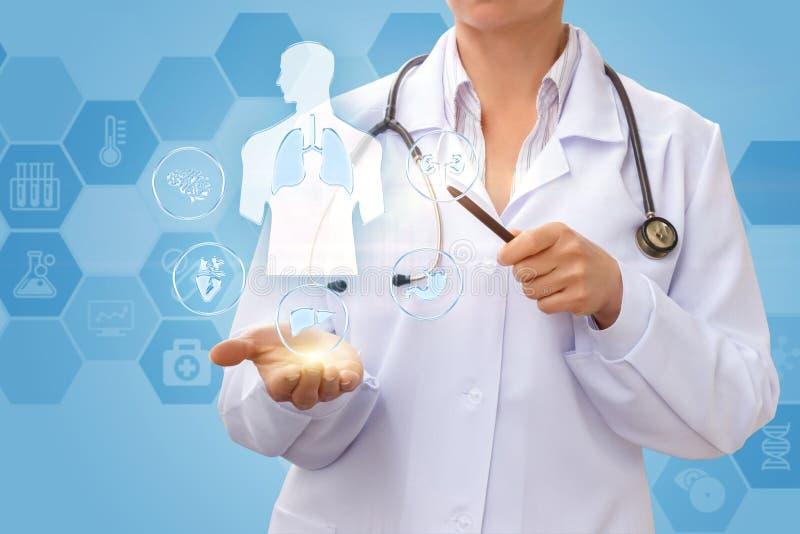 Doktorn visar inre organ royaltyfri fotografi