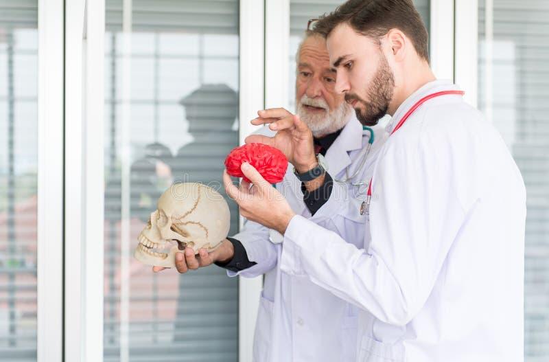Doktorski mężczyzna pracuje czaszkę z plastikowym mózg modelem wpólnie i używa przy szpitalem obraz stock