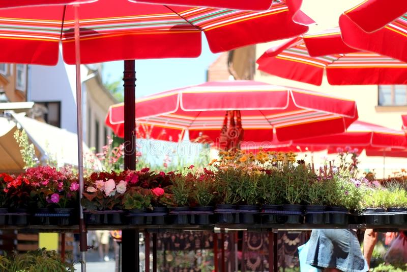 Dolac市场,萨格勒布,克罗地亚 免版税库存图片