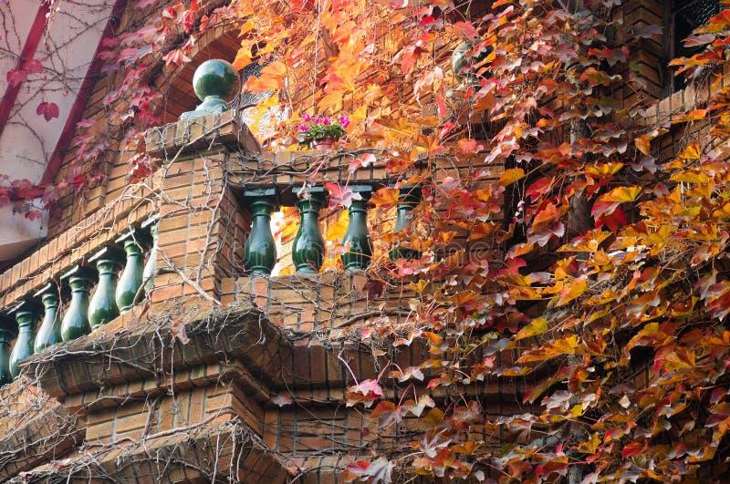 Dold balkong för murgröna royaltyfri fotografi