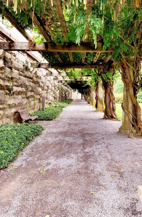 Dold bana för träd av ödegångbanan arkivbilder