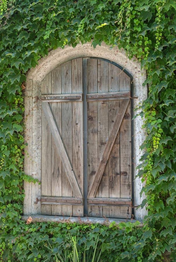Dold byggnad för vinranka, träslutare royaltyfri foto