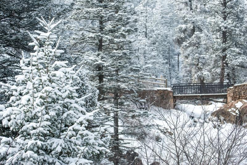 Dold Colorado för snö kanjon royaltyfria foton