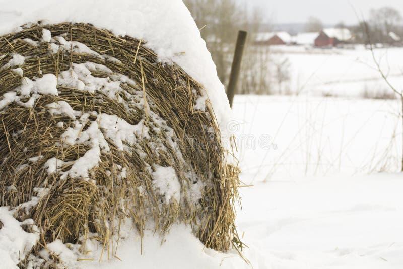 Dold höbal för snö i vinter royaltyfri bild